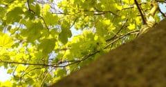 Baum Blätter Sommer