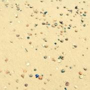 Kindheitserinnerung Muscheln Strand Meer