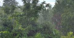 Wolkenbruch Regen Gewitter
